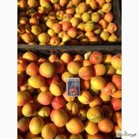 Закупаем абрикос на переработку