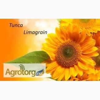 Семена гибрид подсолнечника Тунка (Лимагрейн)