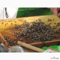 Продам пчелосеьи