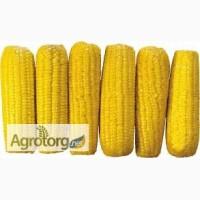 Купуємо Кукурудзу з поля, складів, господарств самовивозом