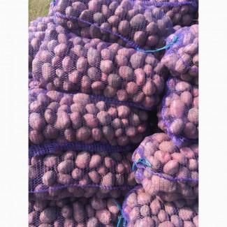 Продам картошку оптом на постояной основи