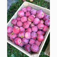 Продам яблука Флорина