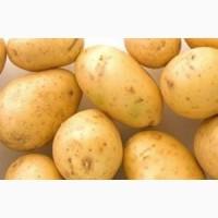 Картофель сорт Агата ранний 1 репродукция, 3 кг, сетка