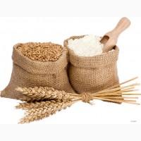 Куплю пшеницю. Оптом. Черкаси і область
