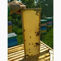 Продам мед с липы 2018 оптом