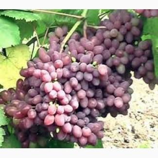 В наличии виноград для крупного опта