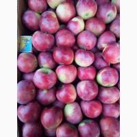 Продам яблуко. Сорти Слава Переможцям, Канділь, Делічія, Теремок, Амулет