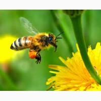Предприятие закупает мед