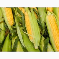 Семена кукурузы Новый ФАО 330 2018 год