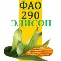 Семена кукурузы ЭЛИСОН ФАО 290 Солар сидс (solar seeds-франция)