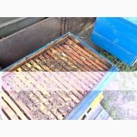 Продам бжджолосімї