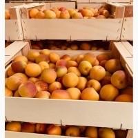 Срочно продам абрикос из Сада с.Новониколаевка Мелитопольский р-н