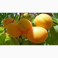 Абрикосы и др фрукти (персики, черешня, виноград и др) овощи( помидоры, огурцы и др)