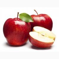 Куплю яблоки по выгодной цене на переработку