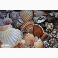 Продается морская кормовая ракушка для птицы 40% кальция, йода и других минералов