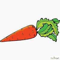 Продам нестандартну моркву