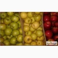 Яблоки вкуснейших сортов