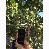 Продам саженцы грецкого ореха сорт Идеал, ВНИМАНИЕ бронь осень 2019. Звоните бронируйте