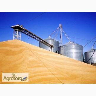 Купим постоянно Пшеницу 2-6 классыпо всей территории Украины