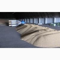 Средства защиты растений Обработка посевмата семян озонированием