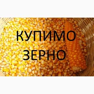 На постійній основі закуповуємо кукурудзу( вологу, не кондицію, некласну, крупу)