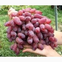 Продам виноград от производителя оптом