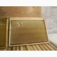 Продам рамки сушь медовую, 300 (Дадан) -(соты) для пчел