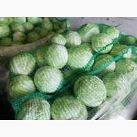 Продам свіжу капусту за хорошою ціною