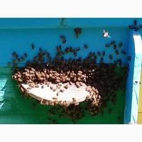 Продам натуральный майский мед с частной пасеки