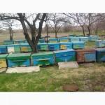 Продажа пчел. Продажа пчелопакетов. Луганск. 2020 год