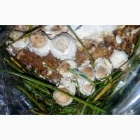 Продам грибы Еринги