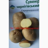 Продаж насіннєвої картоплі від виробника еліта, посадкова картопля