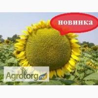 Насіння соняшника гібрид НЕО. ТОЛЕДО, БАРСА (новинка)