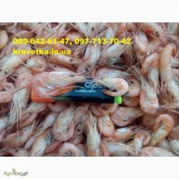 Сеяная креветка черноморская и азовская