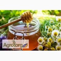 Покупаем мед, без содержания антибиотика, дорого