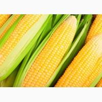Куплю кукурузу дорого