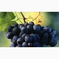 На опт виноград
