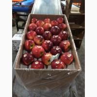 Яблоки для внутреннего и внешнего рынка