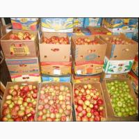 Продам Яблука з Власного Саду в Києві