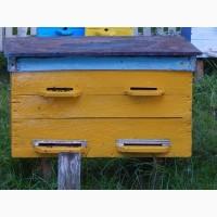 Бджолосім#039;ї 2019 з власної пасіки