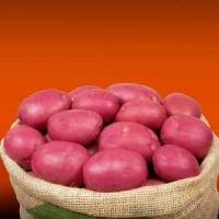 Картопля Інфініті фасовка 5кг, 25кг Голландія