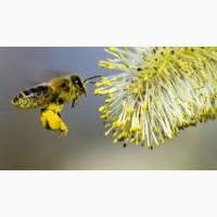 Бджолосім#039; ї та бджолопакети 2020р
