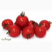 Семена томата CONORY F1 / КОНОРИ F1 фирмы Китано