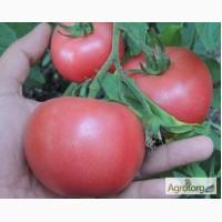 Продам семена томата Пинк Розовый (Euroseed Италия)