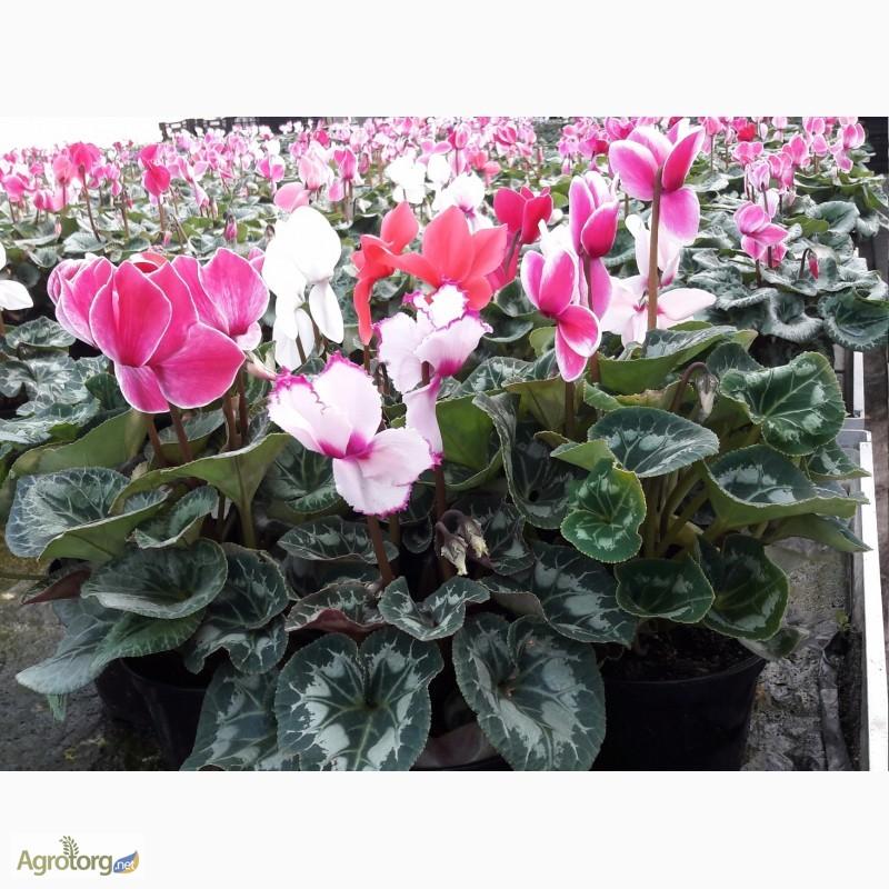 Цветы купить оптом киевская область таллин доставка цветов.ее