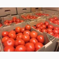 Продам тепличный помидор