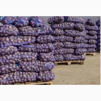Продам картофель 2 – 3 репродукции