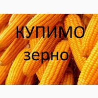 Компанія закуповує дорого кукурудзу подрібнену та відходи кукурудзи. з елеваторів