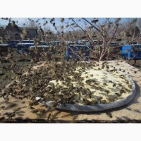 Соевая мука для подкормки пчел, 1 кг, борошно, Украина