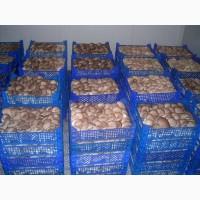 Продам гриби гливи - власне виробництво